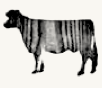 FIG Cow Icon